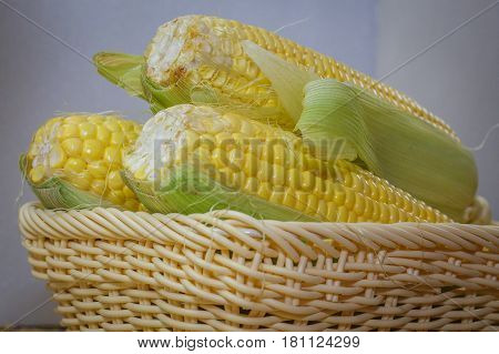 Fresh sweet corn on cobs kernels in the basket against white background corn vegetable isolated.Organic corn is a vitamin C food,magnesium-rich food & contains certain B vitamins & potassium.