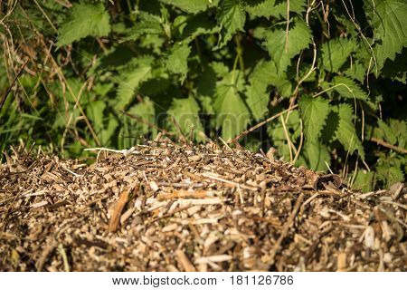 Woodchips lying outside in a garden in front of a fence