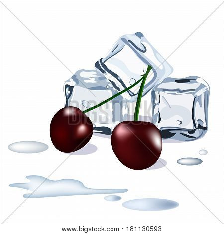 Vector ice cubes drops of water snd cherry berries isolated on the white background
