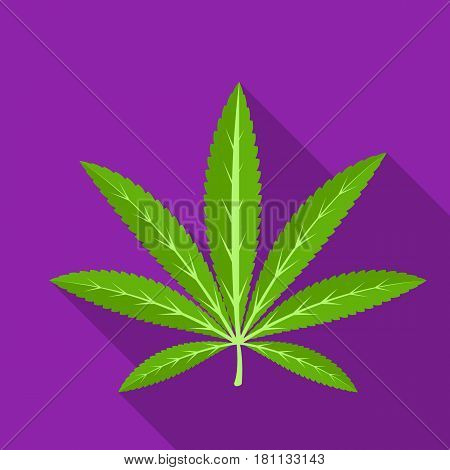 Green leaf of hemp.Hippy single icon in flat style vector symbol stock illustration .