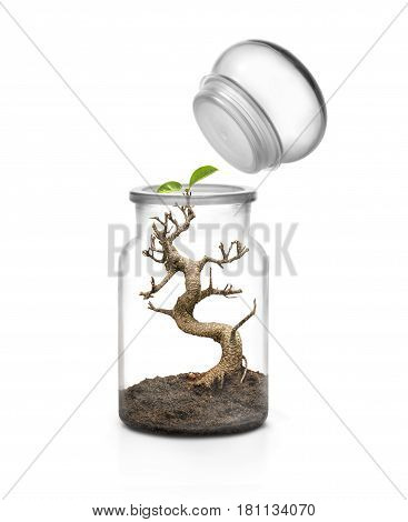 Life survive concept. Glass jar with cap and bonsai growing with soil inside. White background