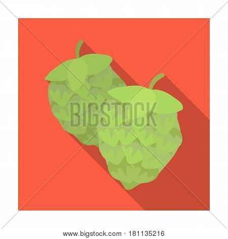 Green hops. Plant for brewing beer. The main component of beer. Pub single icon in flat style vector symbol stock web illustration.