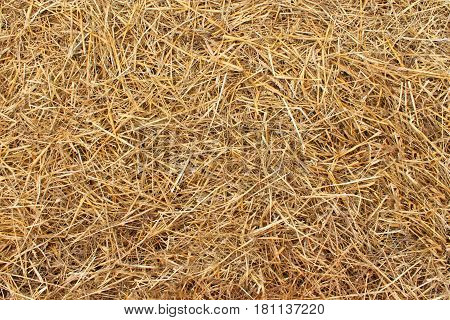 View of dry yellow hay as background