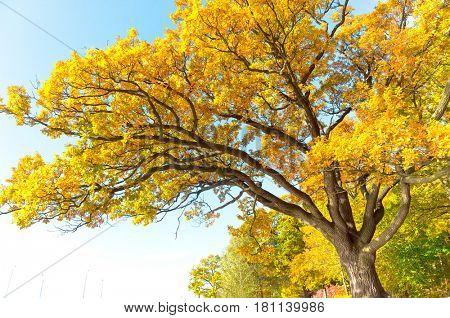 Idyllic Nature Single Tree
