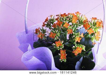 Flowers In A Bunch