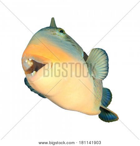 Fish isolated on white background. Yellowmargin Triggerfish