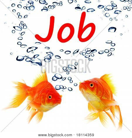 poster of find a job concept with goldfish on white background