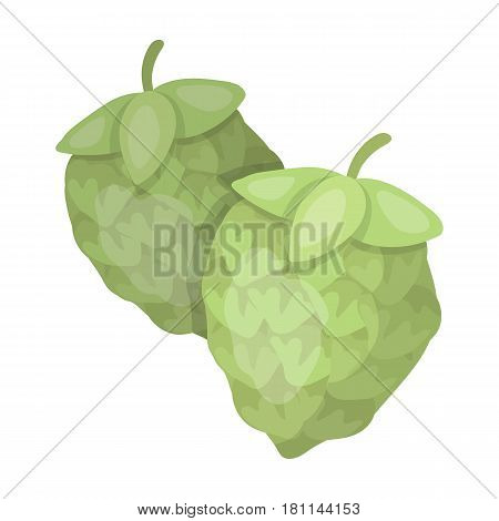Green hops. Plant for brewing beer. The main component of beer. Pub single icon in cartoon style vector symbol stock web illustration.