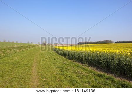 Grassy Bridleway In Springtime