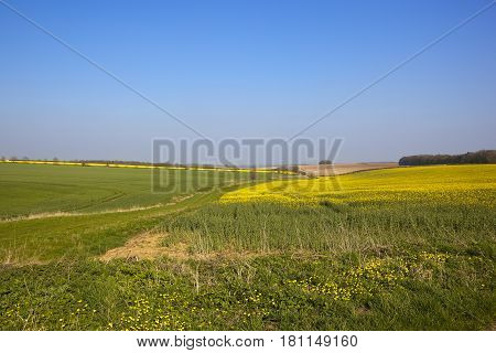Oilseed Rape Crop And Bridleway