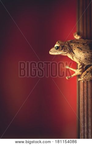 Small tropical frog stick on window frame with red background and copy space