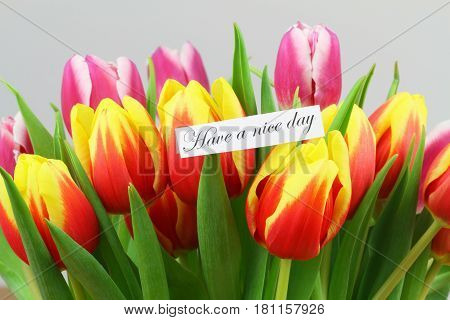 Have a nice day card with red and yellow tulips on rustic wood