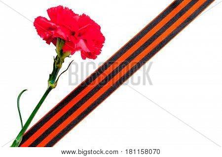 9 May Victory Day background. Red carnation with George ribbon as symbol of 9 May isolated on the white background - 9 May concept.