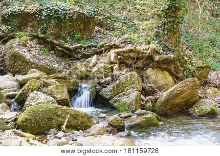 A stream in a mountain gorge overgrown with ivy (lat. Hedera). Spring