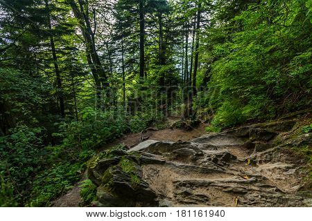 The Appalachian Trail as it crosses the Smoky Mountains in North Carolina and Tennessee.