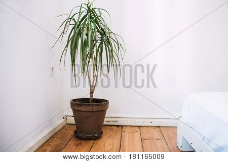 House plant in the pot on the wooden floor