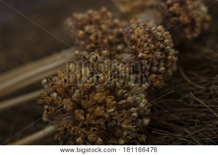 dried flower in the garden near with old grass