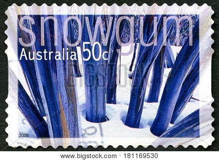 AUSTRALIA - CIRCA 2005: A used postage stamp from Australia depicting an image of the Snow Gum flowering shrub also known as White Sallee or Eucalyptus Pauciflora circa 2005.