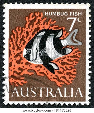 AUSTRALIA - CIRCA 1966: A used postage stamp from Australia depicting an illustration of a Humbug Fish circa 1966.
