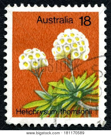 AUSTRALIA - CIRCA 1975: A used postage stamp from Australia depicting an illustration of a Helichrysum Thomsonii circa 1975.