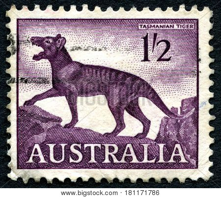 AUSTRALIA - CIRCA 1961: A used postage stamp from Australia depicting an illustration of the now extinct Tasmanian Tiger circa 1961.