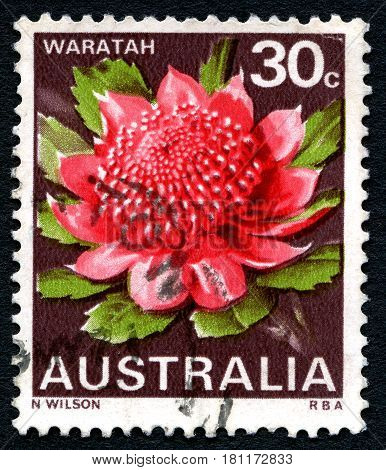 AUSTRALIA - CIRCA 1968: A used postage stamp from Australia depicting an illustration of a Waratah plant circa 1968.