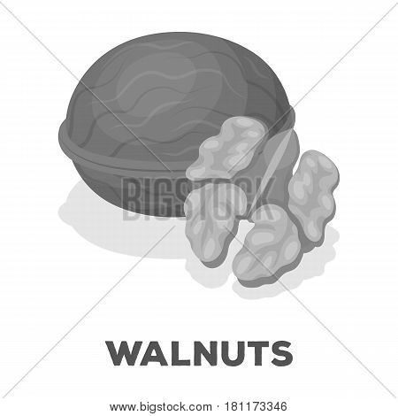 Walnats in the shell.Different kinds of nuts single icon in monochrome style vector symbol stock web illustration.