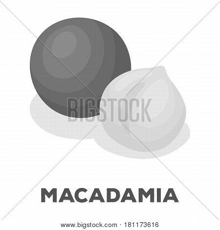 Macadamia.Different kinds of nuts single icon in monochrome style vector symbol stock web illustration.