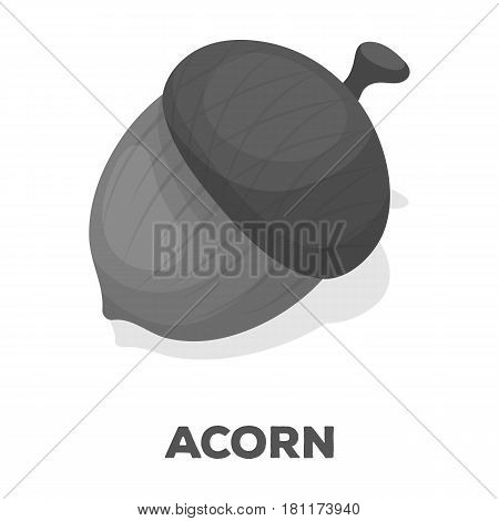 An acorn with a hat.Different kinds of nuts single icon in monochrome style vector symbol stock web illustration.