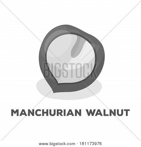 Manchurian walnut.Different kinds of nuts single icon in monochrome style vector symbol stock web illustration.
