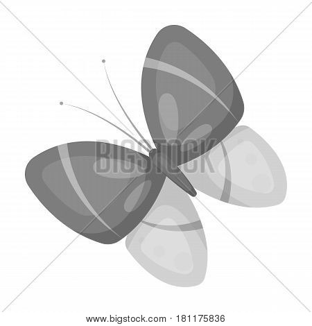 Spring butterfly. Easter single icon in monochrome style vector symbol stock web illustration.