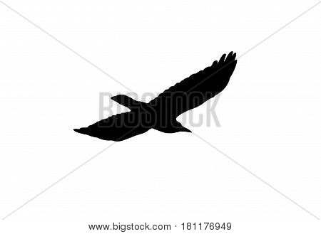 silhouette of a black crow on a white background .