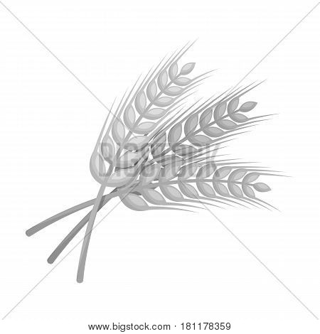 Sprigs of wheat. Plant for brewing beer. Pub single icon in monochrome style vector symbol stock web illustration.