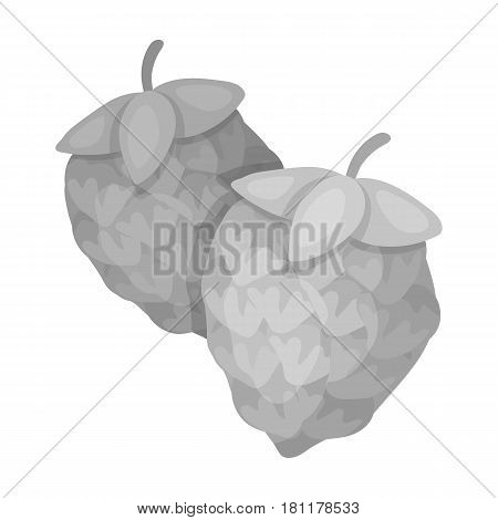 Green hops. Plant for brewing beer. The main component of beer. Pub single icon in monochrome style vector symbol stock web illustration.