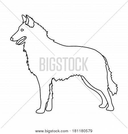 The dark Belgian wolf. Belgium single icon in outline style vector symbol stock web illustration.