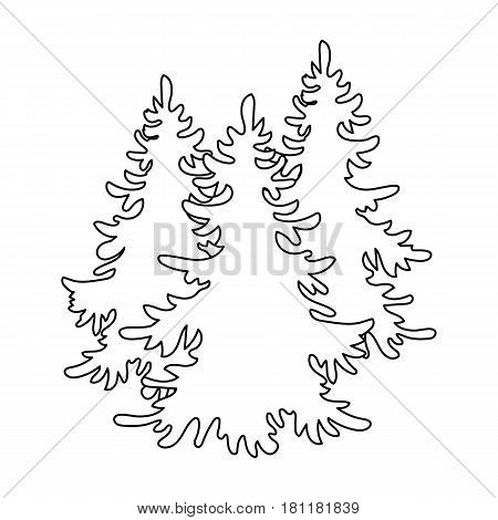 Canadian spruce. Canada single icon in outline style vector symbol stock illustration .