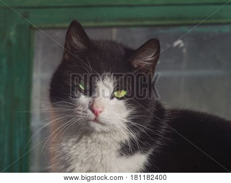 The beautiful cat looking at the camera close up