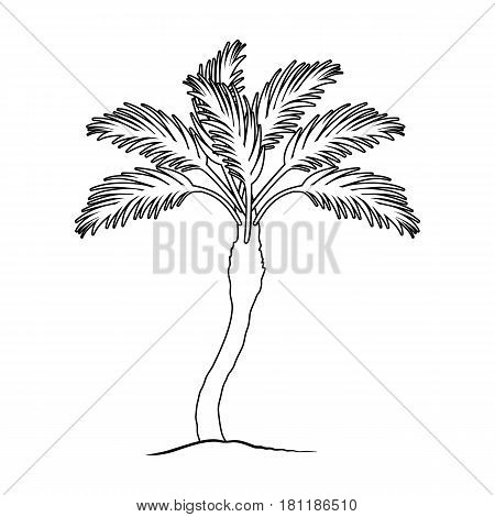 Palm beach tree.Summer rest single icon in outline style vector symbol stock web illustration.