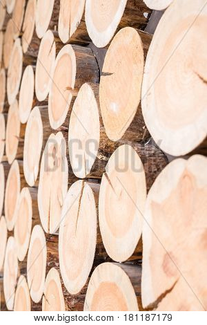 Vertical background of wood logs of different sizes in one plane as the outgoing prospect