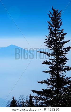 Silhouette Balsam Fir tree with the Smoky Mountains in a fog bank and sun peeking through.