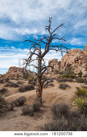 A dead tree reaches for the sky in the Mojave Desert, California