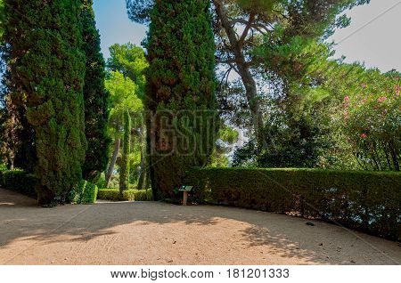 walkway in the mediterranian park with bright greenery