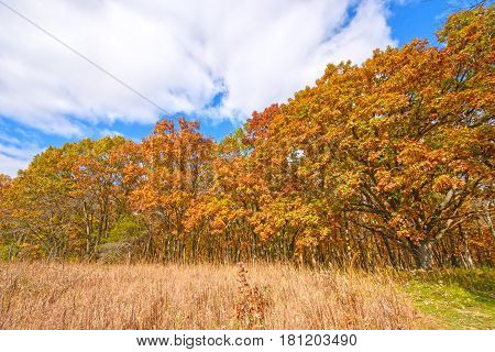 Meadow and Trees in the Fall in Wisconsin