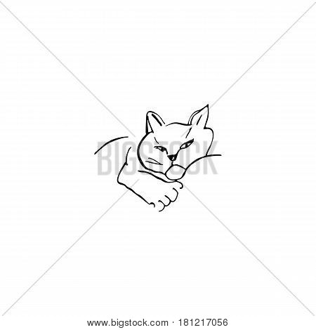 Lying cat, line art. Vector illustration. Doodle art. Freehand outline ink hand drawn picture object sketch.