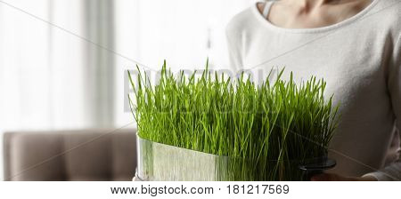 Cropped shot of a european woman holding in hands a dish with sprouted wheat grass. Health, healthy food and lifestyle concept. Horizontal composition, empty space for your promotional content