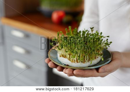 Woman hands holding a dish with mix of fresh sprouts against cozy kitchen interior. Home growing micro greens for a healthy diet. Healthy food, health care concept.