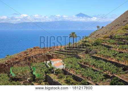 AGULO, LA GOMERA, SPAIN: Cultivated terraced fields near Agulo village with the Atlantic Ocean and Teide volcano (in Tenerife Island) in the background