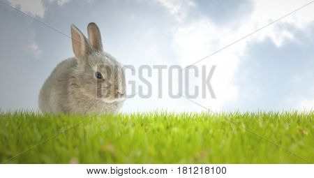 Digital composite of Easter rabbit with eggs in front of blue sky