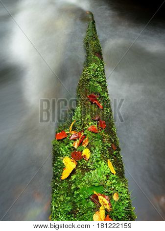 Broken Mossy Trunk Of Aspen Tree Fall In Mountain River. Orange And Yellow Leaves