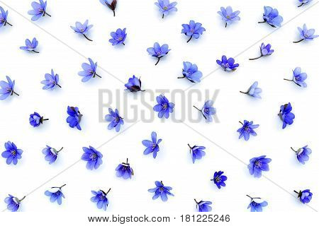 Floral Pattern Made Of Blue Spring Flowers (hepatica Nobilis) On White Background. Top View. Pattern